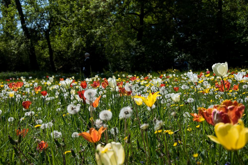 Giardinity Primavera 2018 (4)