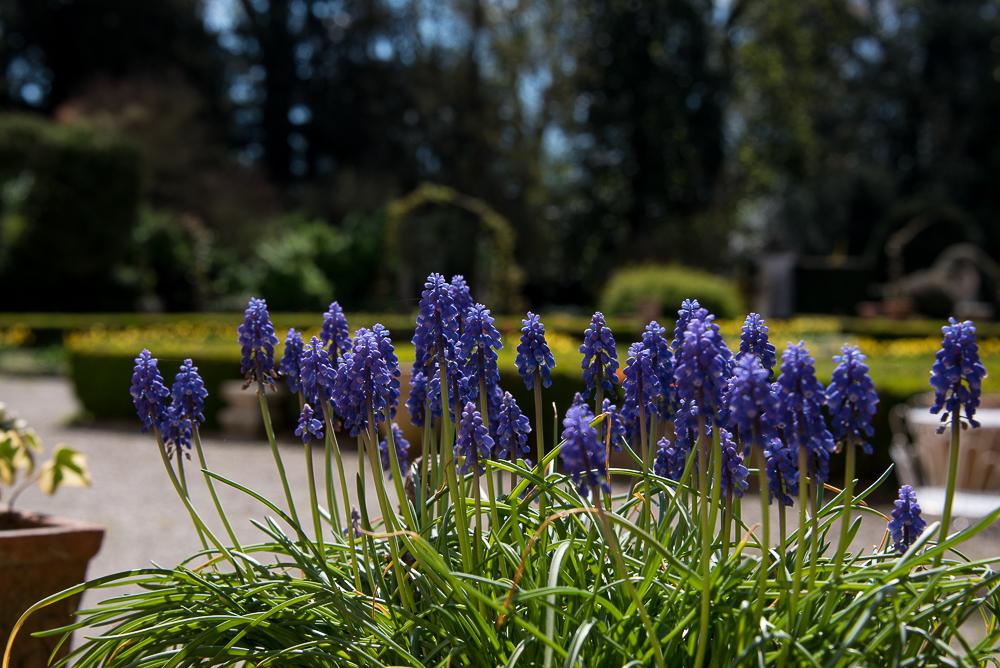 Giardinity Primavera 2018 (6)