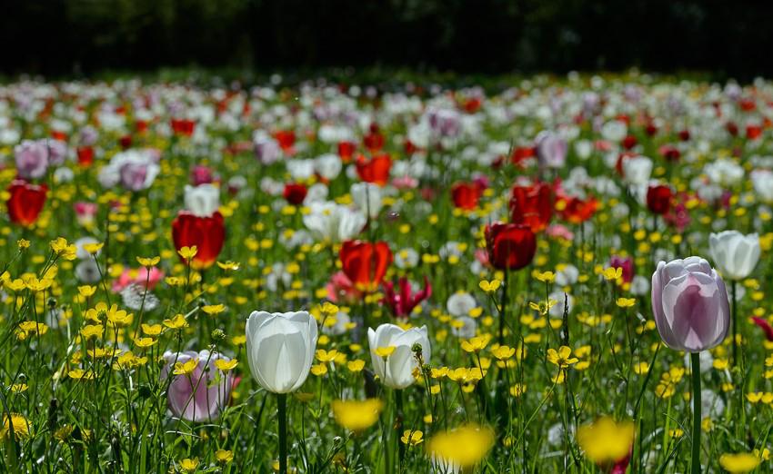 Giardinity Primavera 2018 (8)