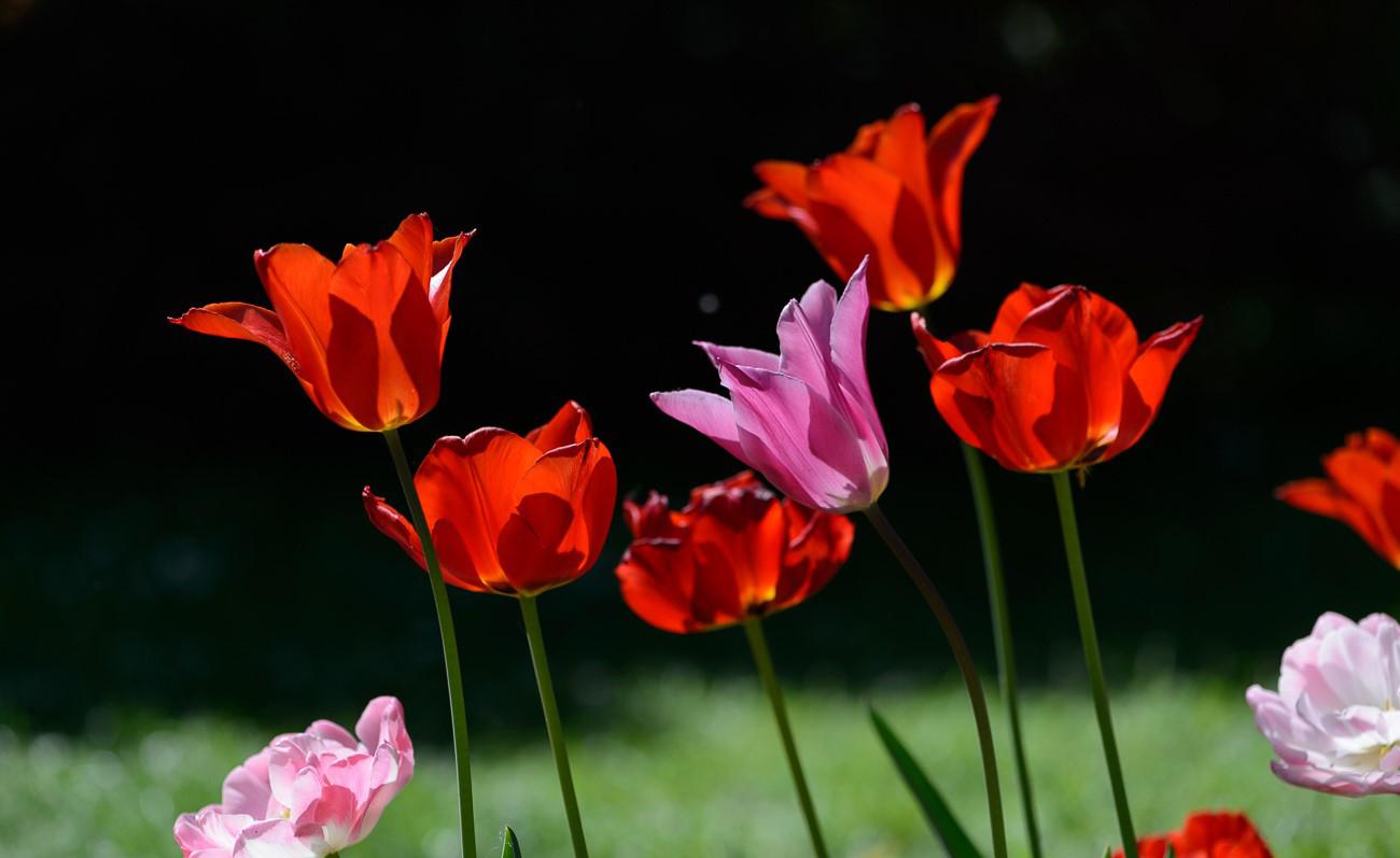 Giardinity Primavera 2018 (9)