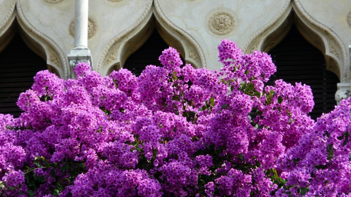 Agave in fiore dalla terrazza di Villa Borghese Cavazza a Isola del Garda