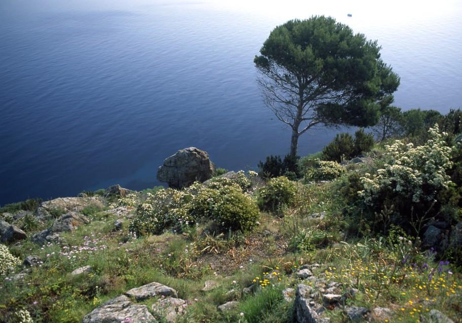 La macchia mediterranea lessons tes teach - La mediterranea ...