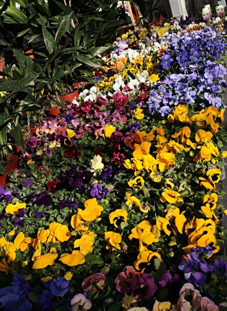 Fiori di primavera 1 foto maurizio for Fiori di primavera