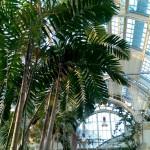 palmhaus vienna