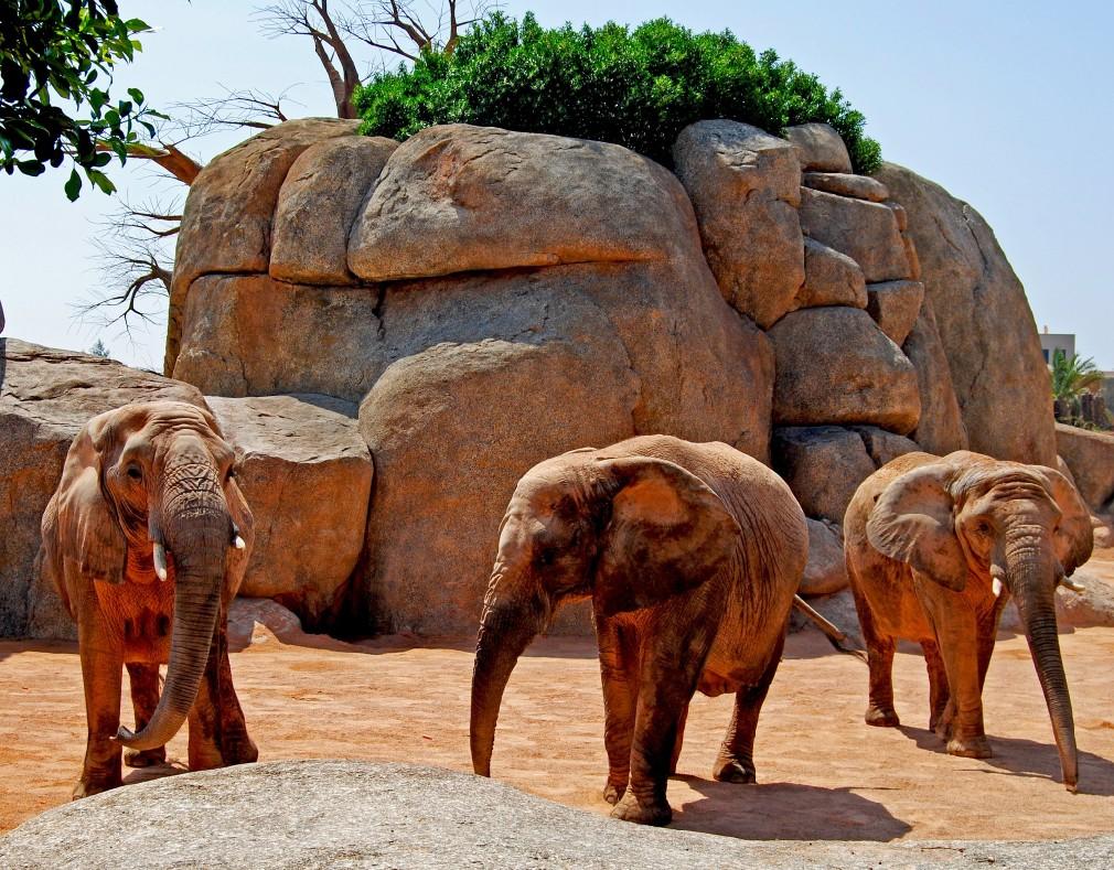 elefantes bioparc