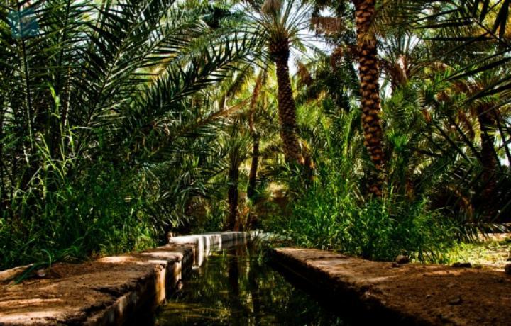 Oceanair-Travels-Al-Ain-TourAl-Falaj.