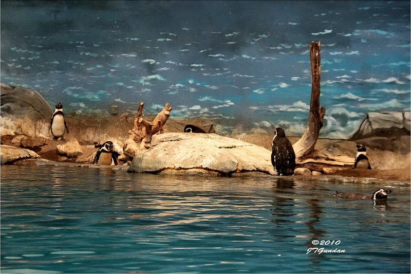 zoo di Al Ain