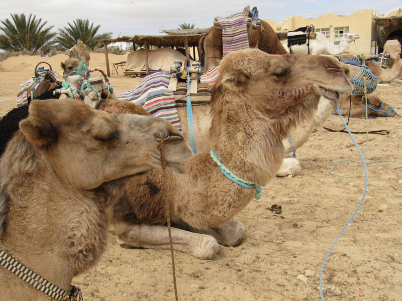 TUNISIA OASI DOUZ  285