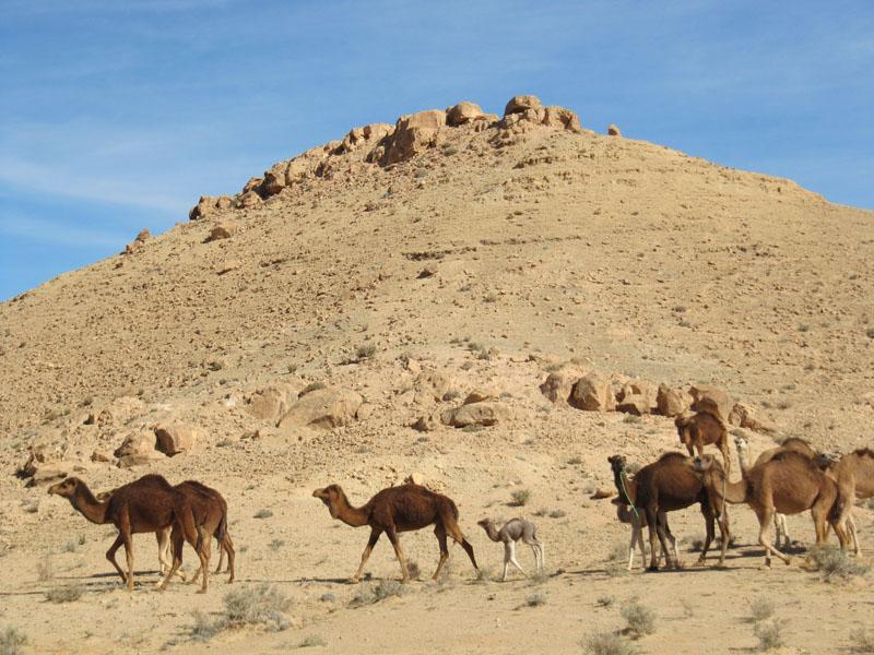 TUNISIA OASI NEL DESERTO  084