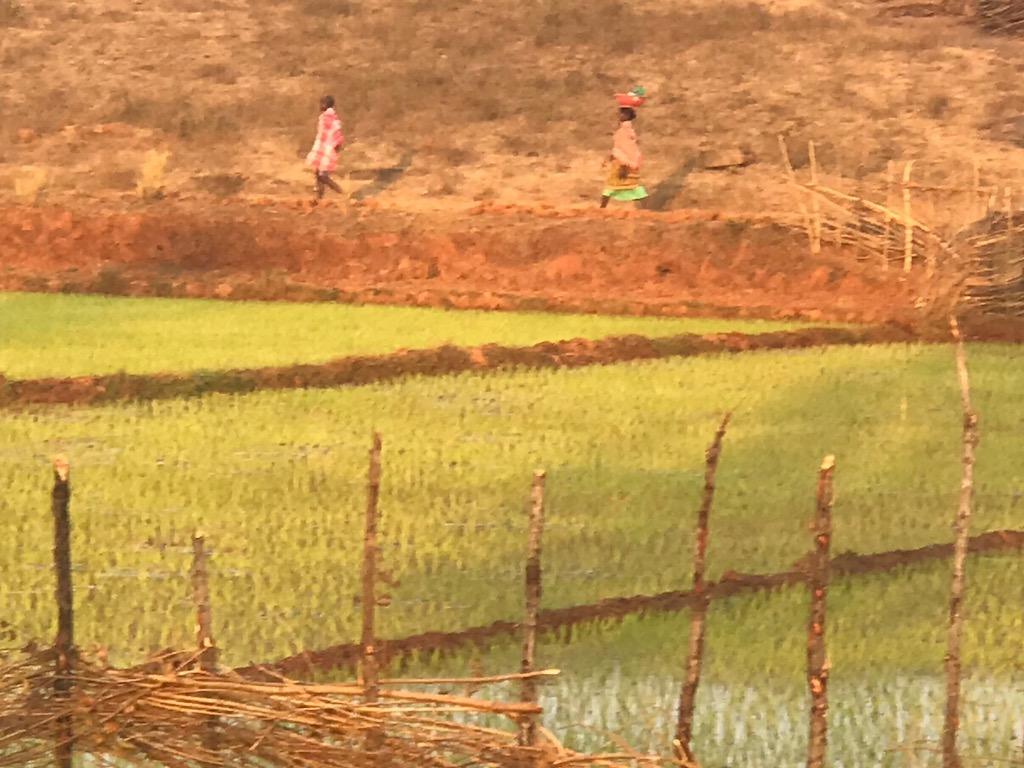 Le tribù dell'Orissa in India