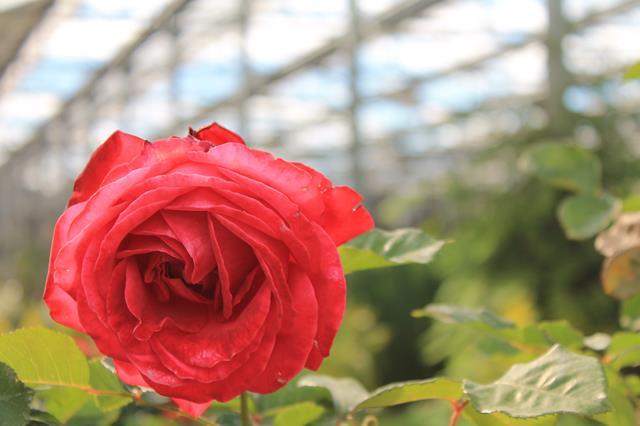 Al Centro Verde Caravaggio, piante e fiori per la casa ed il giardino e tanti corsi gratuiti per tutti. Dal 4 maggio si va a scuola di barbecue