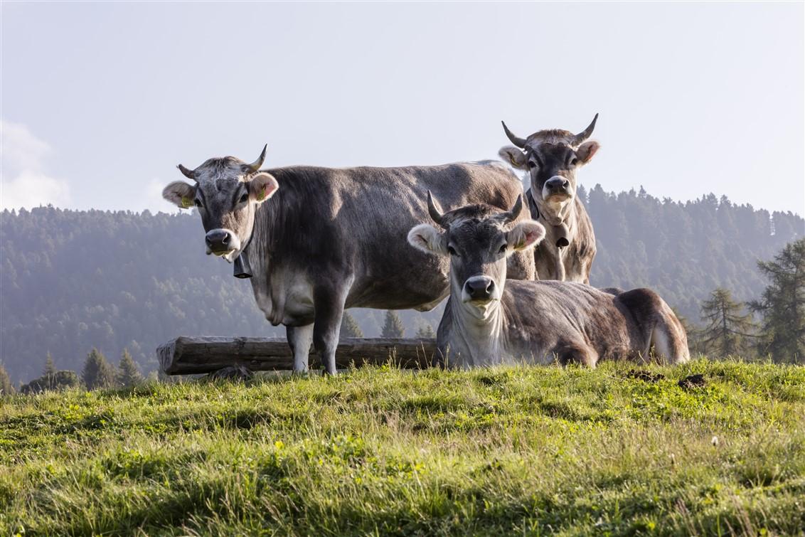 L'Alto Adige fa stagione tutto l'anno. In questo periodo tante idee per riappropriarsi di sensazioni ed emozioni camminando e la proposta Alto Adige Balance