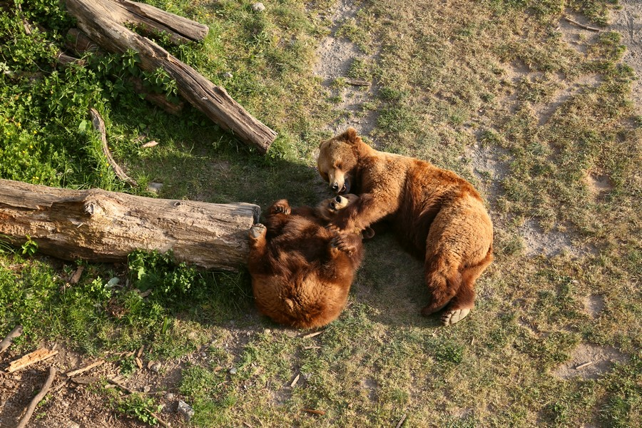 Berna tra orsi, Einstein e carnevale