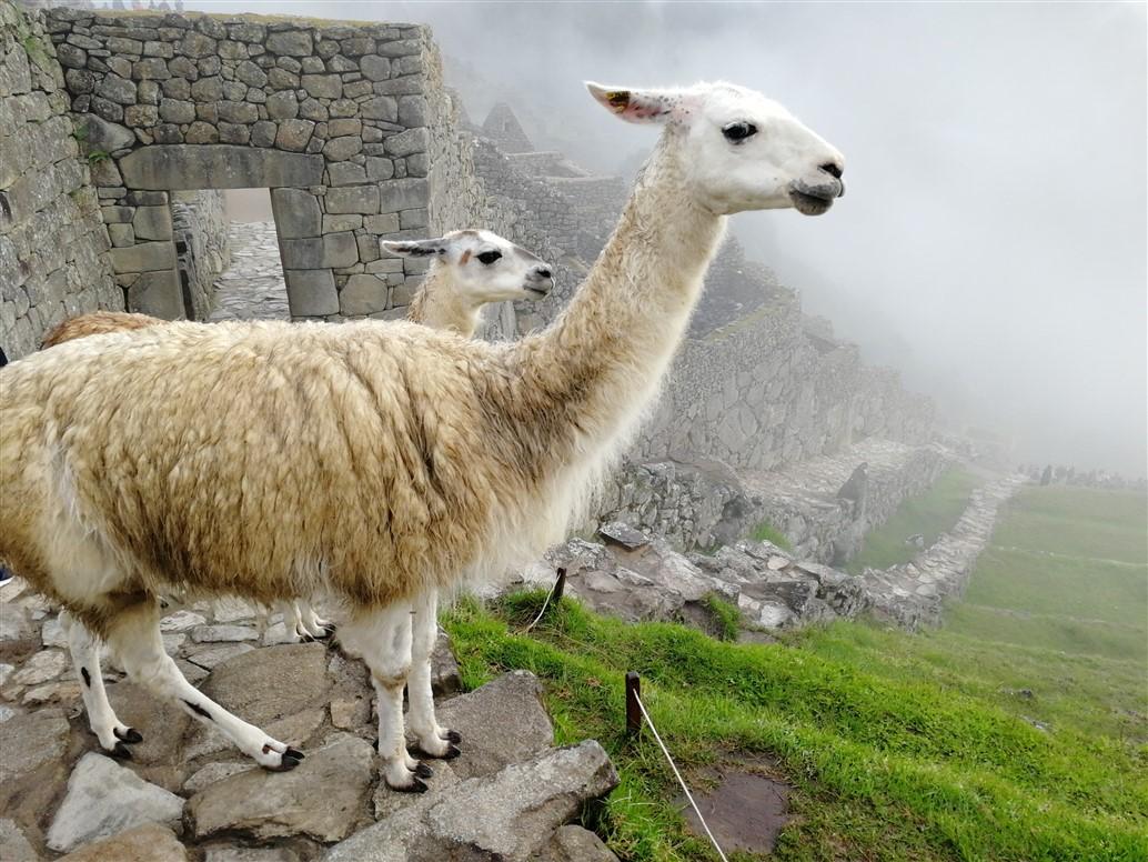 In Perù sulle tracce degli Inca